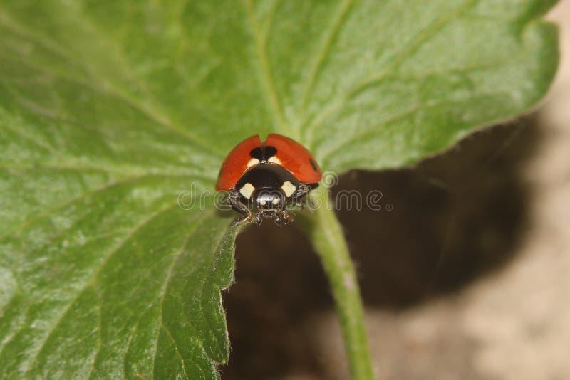 Besouros, aranhas, insetos imagem de stock