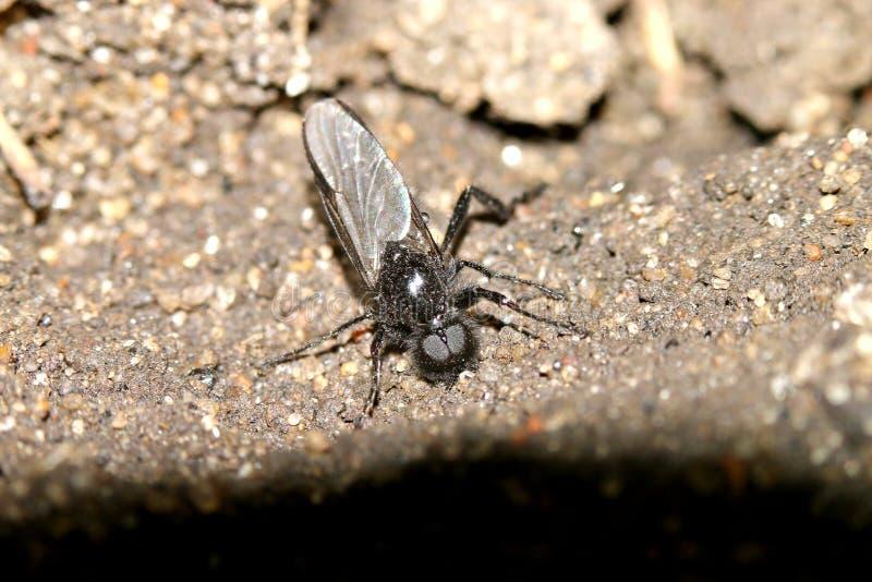 Besouros, aranhas, insetos fotografia de stock royalty free