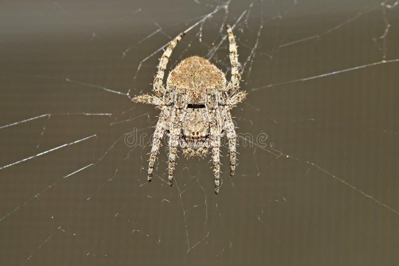 Besouros, aranhas, insetos foto de stock