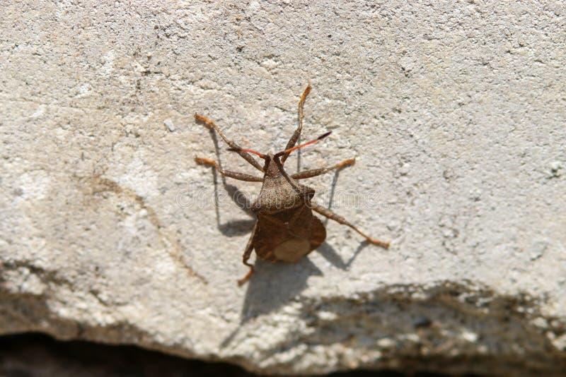 Besouros, aranhas, insetos fotografia de stock