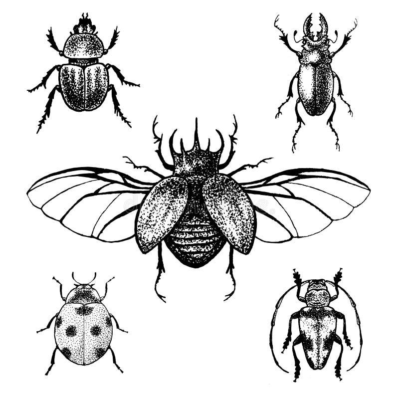 Besouros tirados mão ajustados ilustração do vetor