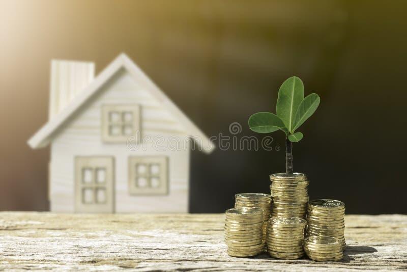 Besparingar för myntträd- och hussko fotografering för bildbyråer