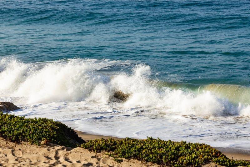 Bespattende golf op terugslag en zandig strand, met iceplant en, zand stock foto's