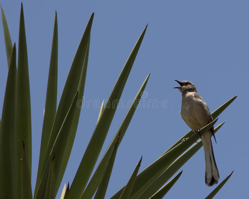 Bespottende Vogel royalty-vrije stock afbeelding