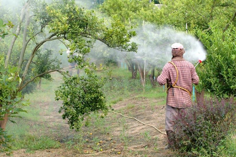 Bespuitend pesticide royalty-vrije stock afbeelding