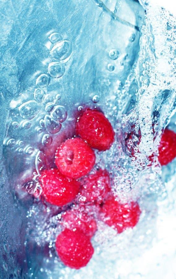 Bessen in water royalty-vrije stock fotografie