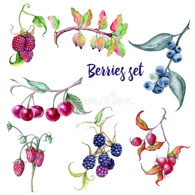 Bessenreeks Rozebottels en van de aardbeienframbozen van bosbessenbraambessen de kruisbessenkersen royalty-vrije illustratie