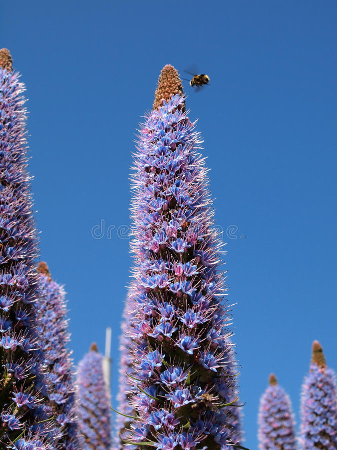 Bestäubende Bienen lizenzfreies stockfoto