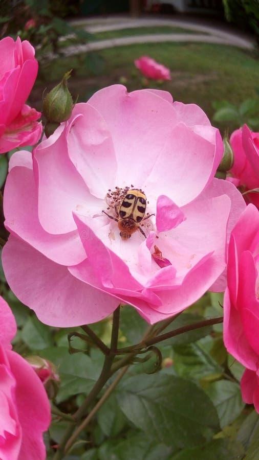 Bestäubungsblume des Frühlinges und glückliches Insekt lizenzfreies stockfoto