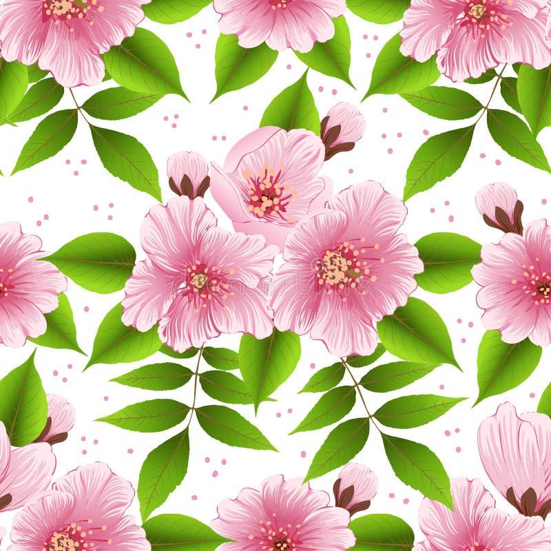 Beståndsdel för modell för vektorsakura blomma sömlös Elegant textur för körsbärsröd blomning för bakgrunder vektor illustrationer