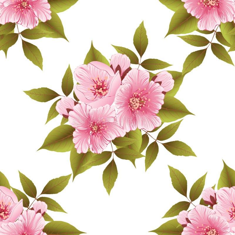 Beståndsdel för modell för vektorsakura blomma sömlös Elegant textur för körsbärsröd blomning för bakgrunder stock illustrationer