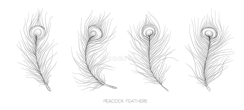 Beståndsdel för vektor för fågel för Pavonine fjäderpåfågel dragen märkes- hand royaltyfri illustrationer