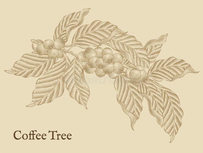 Beståndsdelar för kaffeträd vektor illustrationer