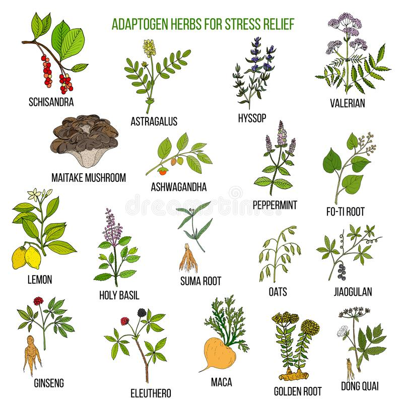 Free Best Adaptogen Herbs For Stress Relief Royalty Free Stock Image - 103447966