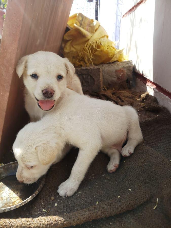 #the_best_animals dos #dogs dos animais de estimação imagens de stock