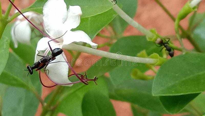 Some special picture taken naturally. Best beauty flower blom naturally ant increase his beauty of flowers stock image