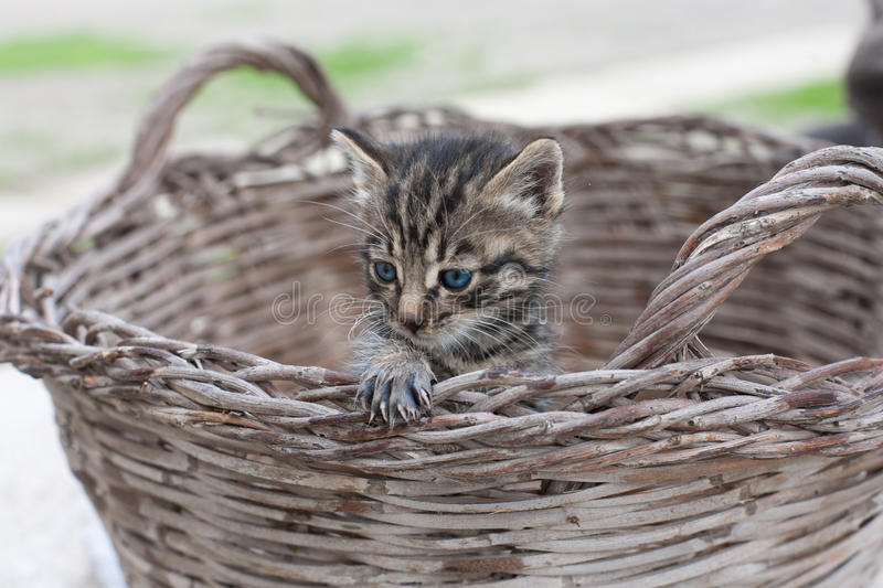 Download The best cat stock image. Image of adorable, coat, mammal - 27218215