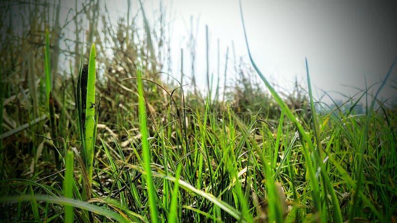 Best desktop natural wallpaper. Natural green grass wallpaper for desktop stock photography