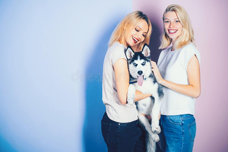 The best dog ever. Pretty women hold pedigree dog. women with dog pet. Happy girls with sensual look. Husky dog. With blue eyes and wolf like look. Happy stock photography