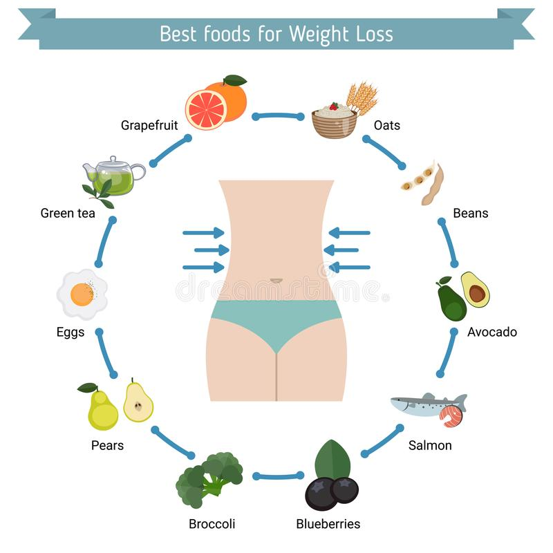 Best Foods for weight loss. royalty free illustration