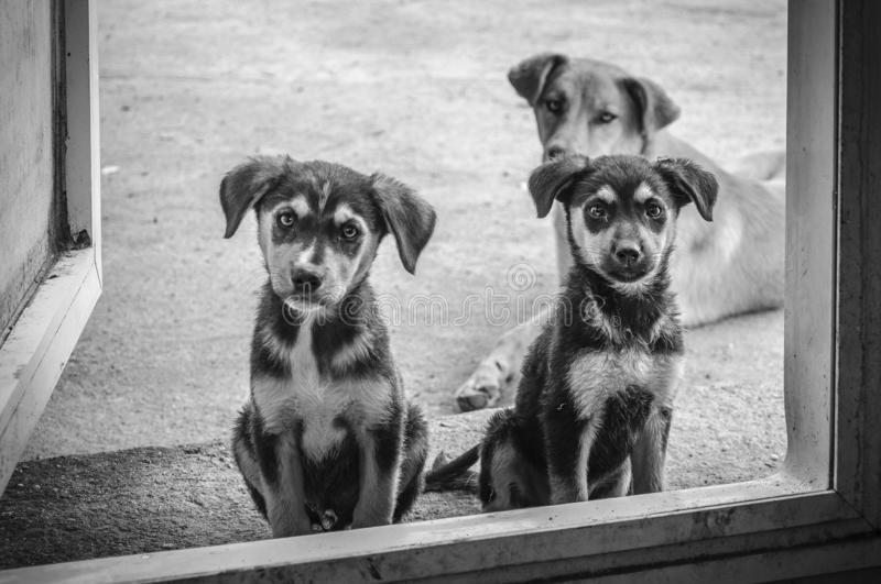 Best friend-three dogs stock photography