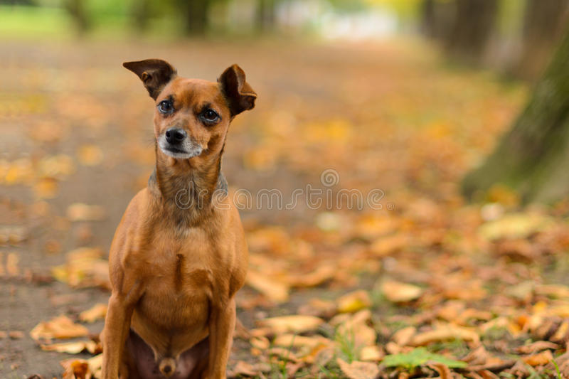 Best friend in the forrest stock photo