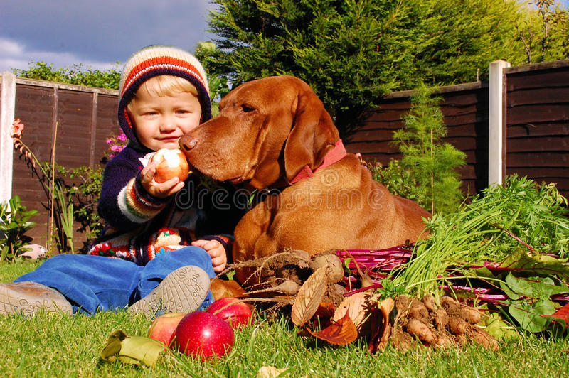 Best friends. Little boy sharing the goods of autumn with the dog, his best friend royalty free stock photo