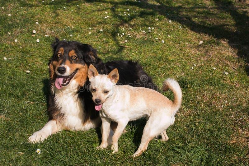 Best friends dogs relaxing in the garden stock image