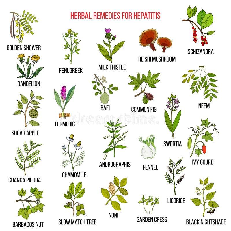 Best herbal remedies for hepatitis vector illustration