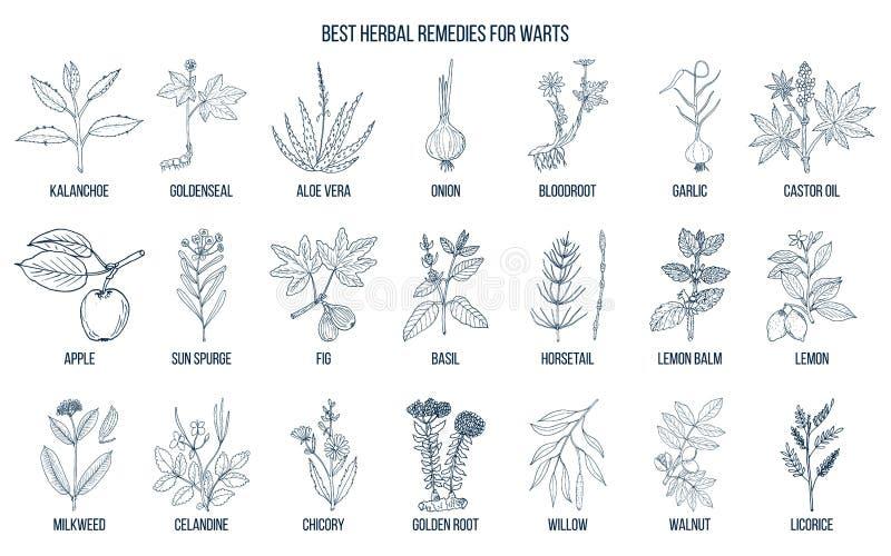 Warts Stock Illustrations – 243 Warts Stock Illustrations, Vectors