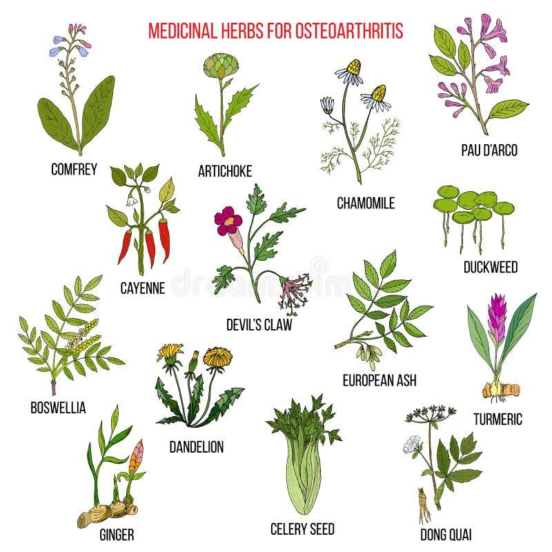 Best medicinal herbs for osteoarthritis stock illustration