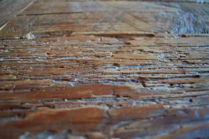 Best texture wood dark 2 stock photography