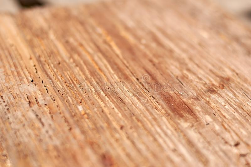 Best texture wood grain 4 stock photo