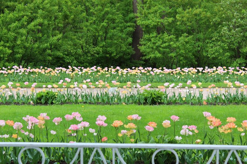 The best time spending spring in the city is a flowering park. Outdoor stock photography