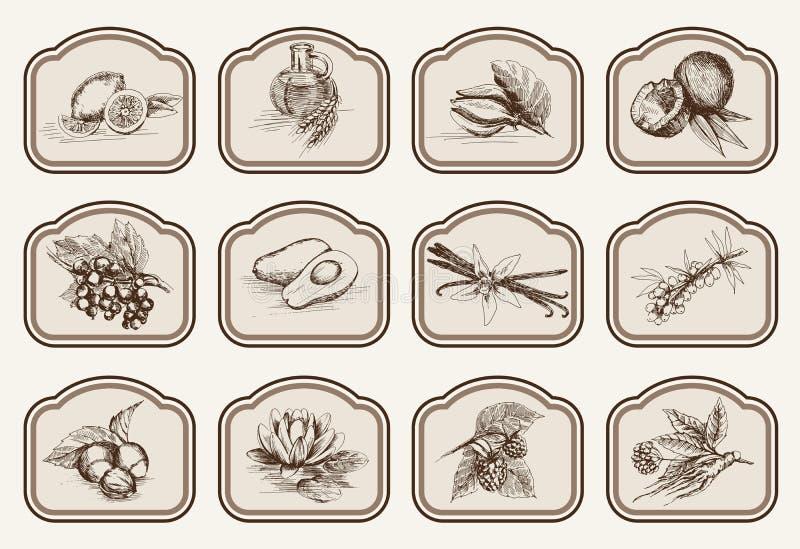 Bestandteile für Naturkosmetik lizenzfreie abbildung