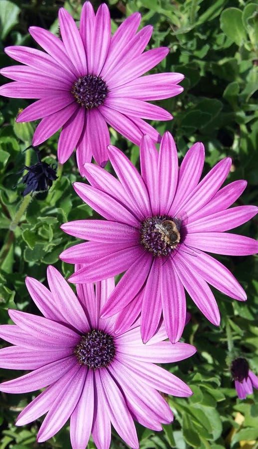 Beste bloemen royalty-vrije stock afbeeldingen