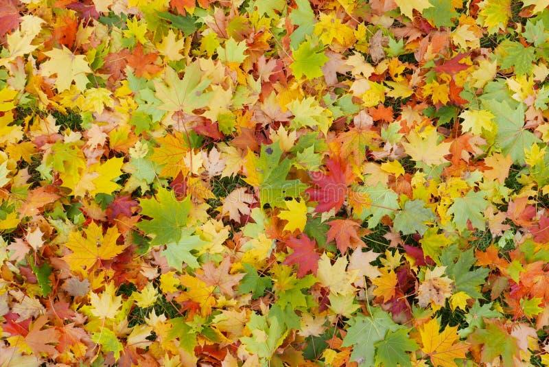 Beste Farben des Herbstes lizenzfreie stockfotos