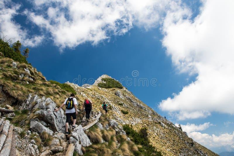 Beste Freunde, die auf einer herrlichen alpinen Steigung an einem sonnigen Sommertag wandern stockbilder