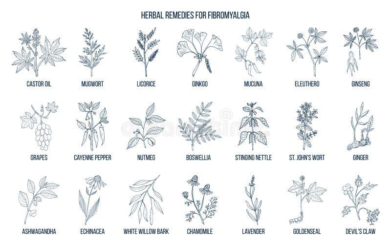 Beste geneeskrachtige kruiden voor fibromyalgia royalty-vrije illustratie