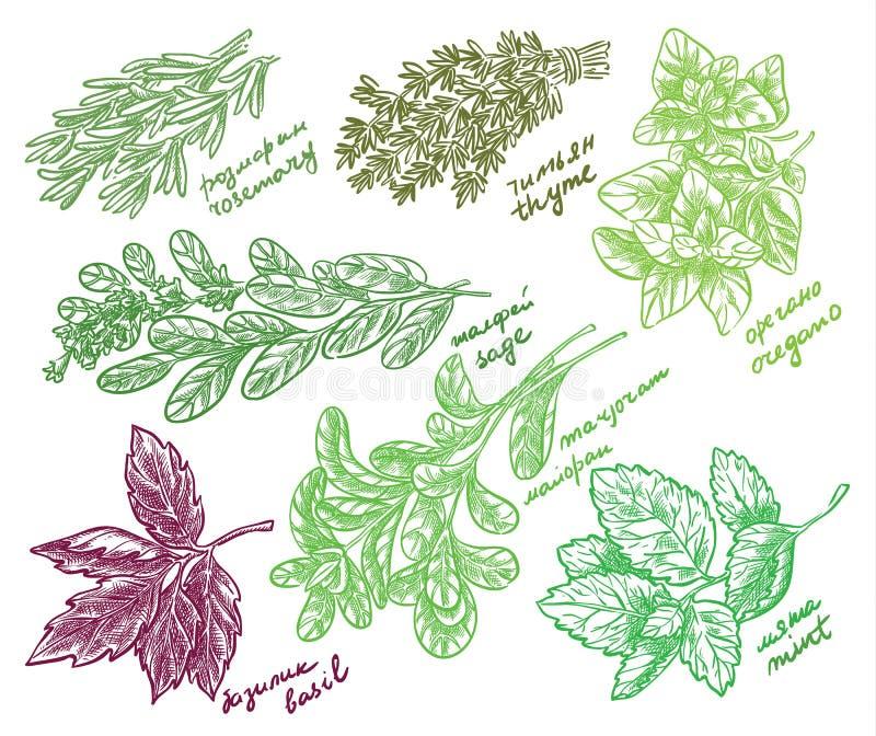 Beste Geurige Kruiden voor Uw Tuin vectorschets royalty-vrije illustratie