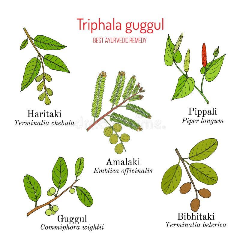 Beste kruiden de remedieformulering van Ayurvedic, Triphala guggul met vijf kruiden Amla, Hareetaki, Vibheetaki, Lange peper vector illustratie