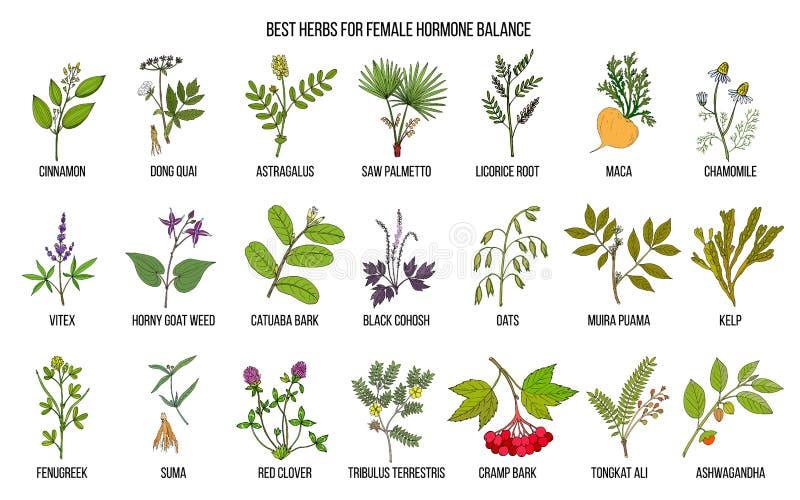 Beste kruiden voor vrouwelijk hormoonsaldo stock illustratie