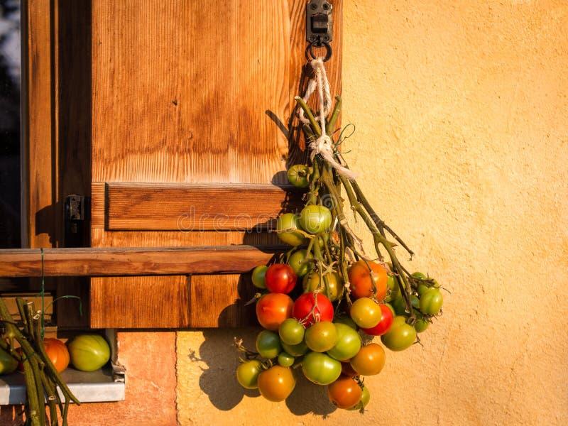 Beste manier om groene tomaten te rijpen stock fotografie