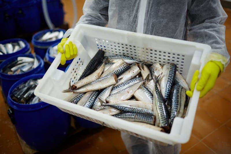 Beste sardines royalty-vrije stock fotografie