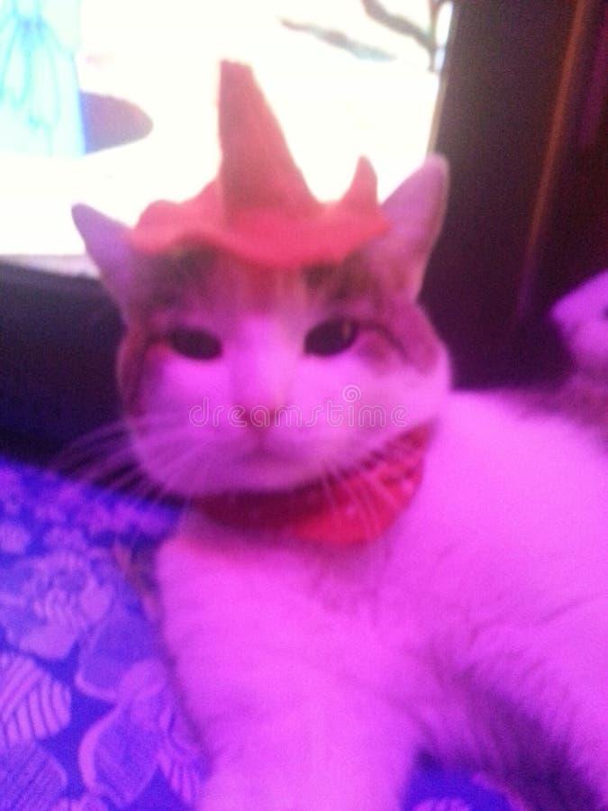 Beste super kat stock foto