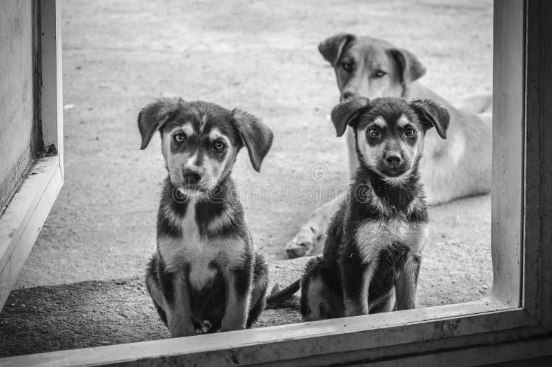 Beste vriend-drie honden stock fotografie