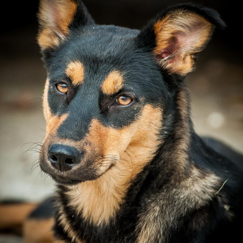 Beste vriend-hond royalty-vrije stock foto's