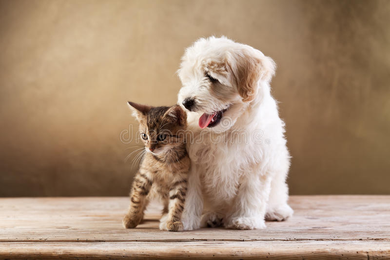 Beste vrienden - katje en kleine pluizige hond stock fotografie
