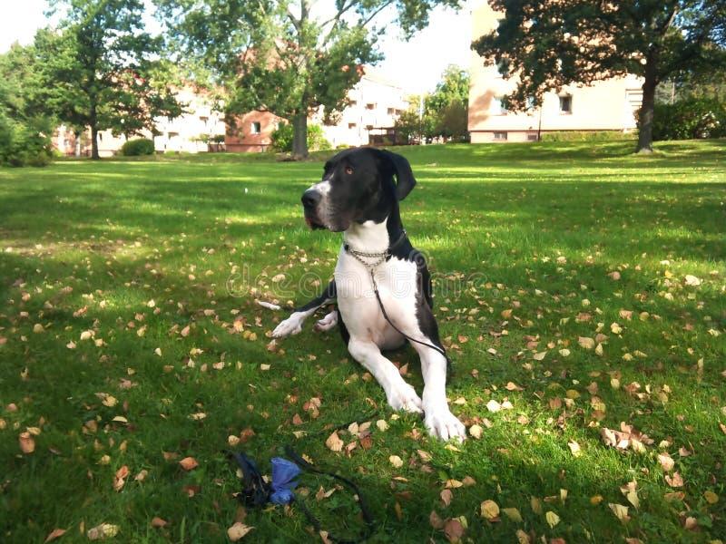 Bester Hund überhaupt lizenzfreie stockfotos