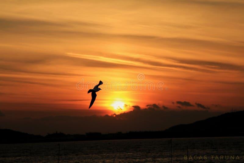 Bester Sonnenuntergang lizenzfreie stockbilder